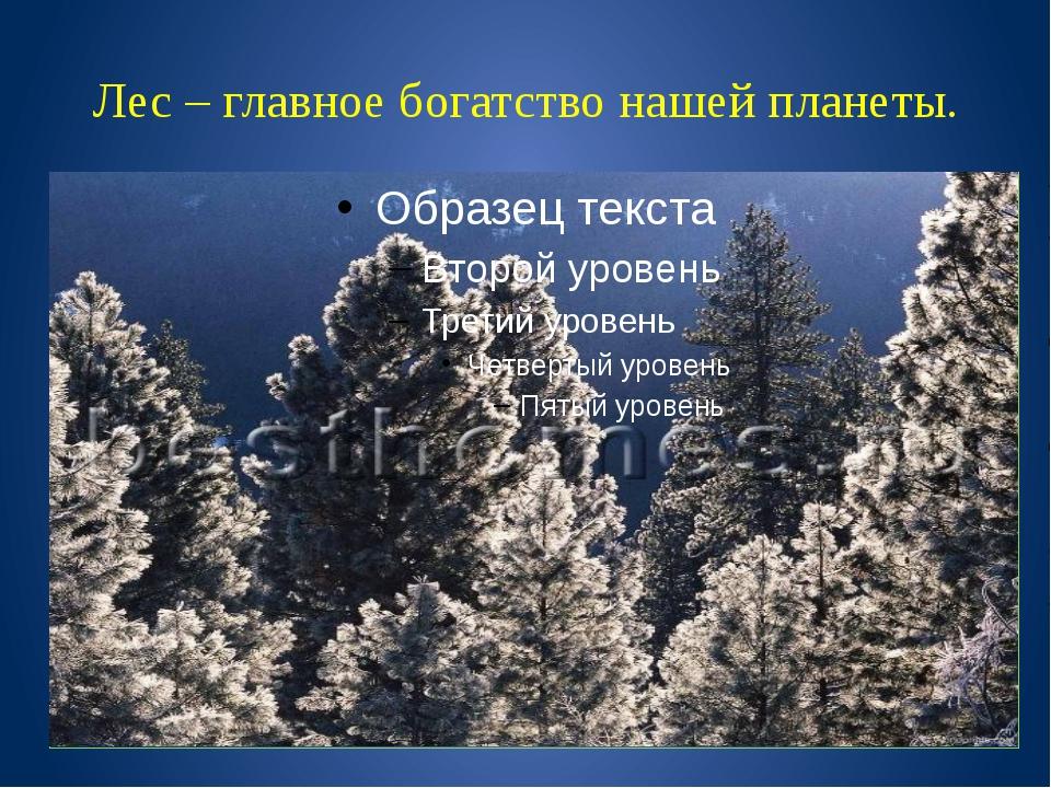 Лес – главное богатство нашей планеты.