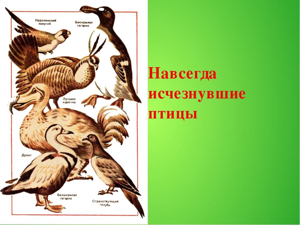 Навсегда исчезнувшие птицы