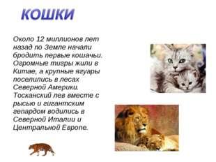 Около 12 миллионов лет назад по Земле начали бродить первые кошачьи. Огромные