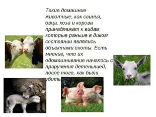 Такие домашние животные, как свинья, овца, коза и корова принадлежат к видам,