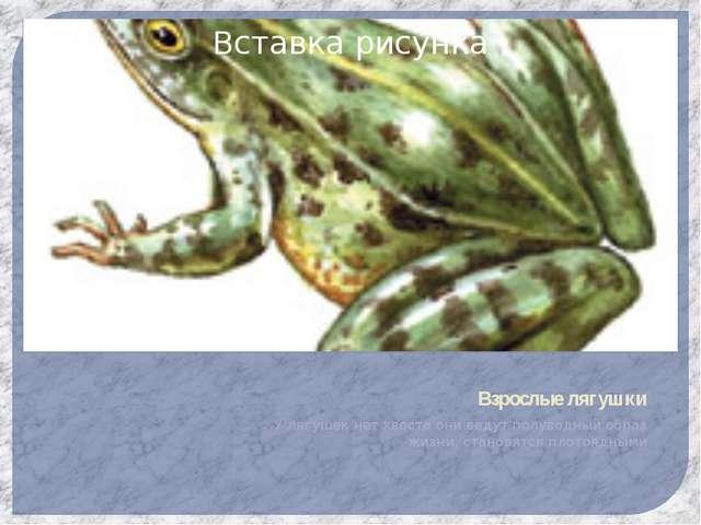 Взрослые лягушки У лягушек нет хвоста они ведут полуводный образ жизни, стано...