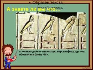 А знаете ли вы что… 4. Культ сов процветал еще в древнем Египте Сегодня совы