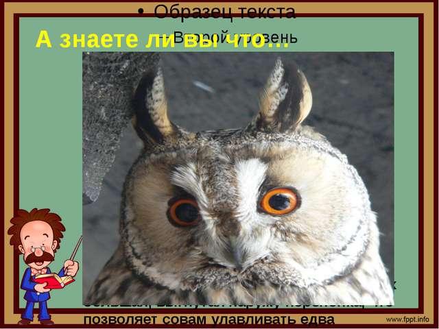 А знаете ли вы что… 2. Кисточки на голове у совы – не уши Хваленые уши совы,...