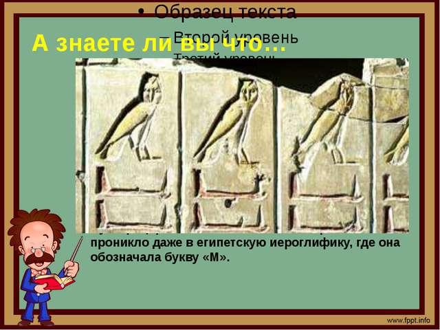 А знаете ли вы что… 4. Культ сов процветал еще в древнем Египте Сегодня совы...