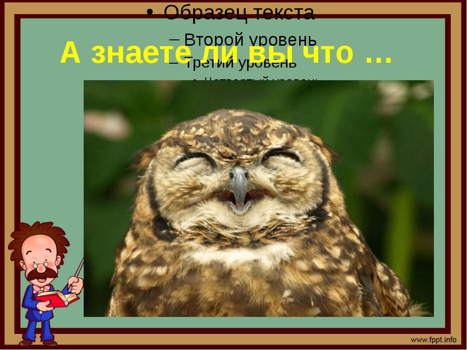 А знаете ли вы что … 1. Не все совы ухают Часто говорят, что совы «видят» уш...