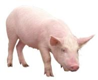 Картинки животных - Дикие животные (млекопитающие 3). Пищуха - 21 May 2013 - Blog - Goblin-gaga