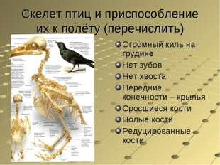 Скелет птиц и приспособление их к полёту (перечислить) Огромный киль на груди