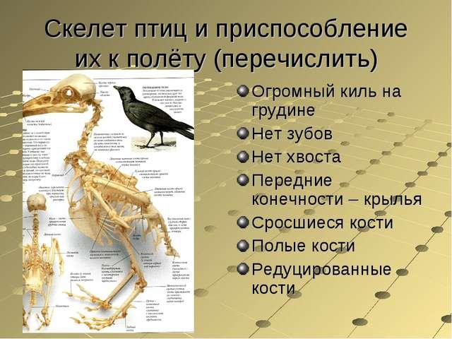 Скелет птиц и приспособление их к полёту (перечислить) Огромный киль на груди...
