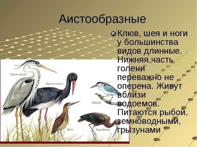 Аистообразные Клюв, шея и ноги у большинства видов длинные. Нижняя часть голе...