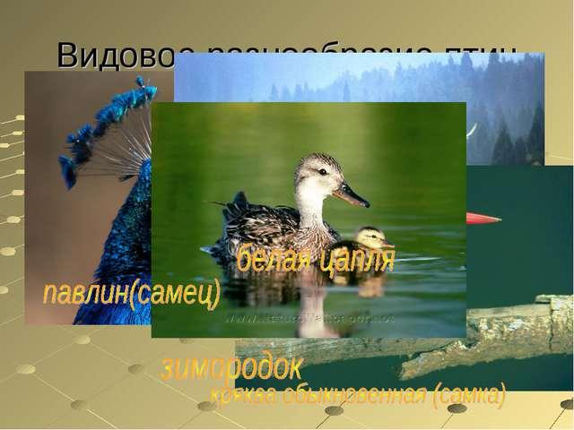 Видовое разнообразие птиц