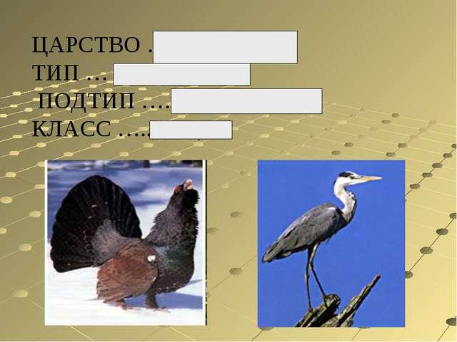 ЦАРСТВО …..животные ТИП … хордовые ПОДТИП ….Позвоночные. КЛАСС …..птицы