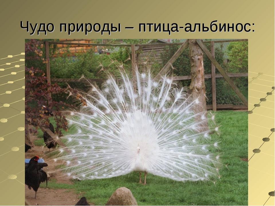 Чудо природы – птица-альбинос: FuckYouBill - Положение в современном мире С 1...