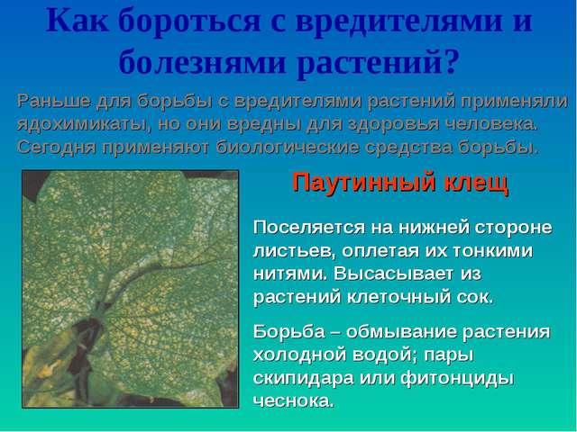 Как бороться с вредителями и болезнями растений? Раньше для борьбы с вредител...