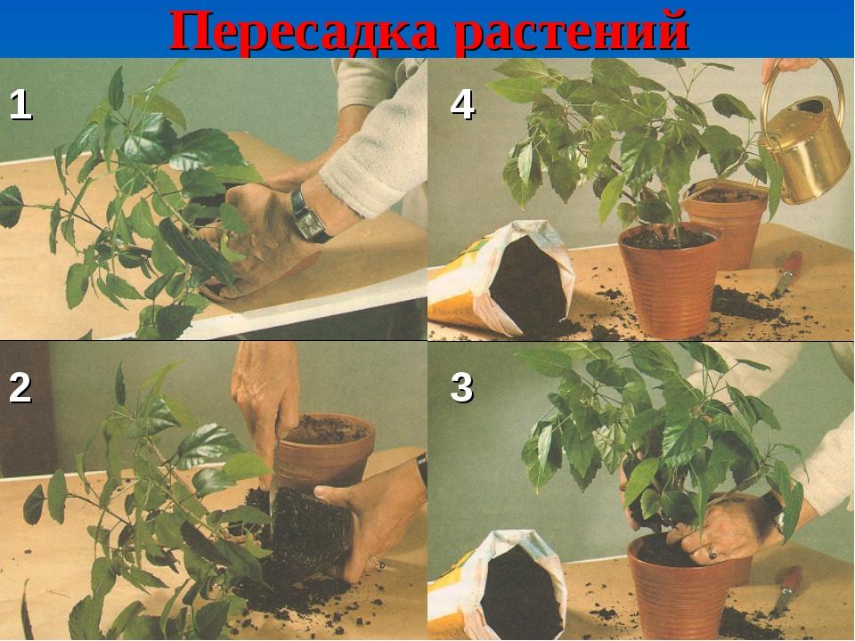 Пересадка растений 1 2 3 4