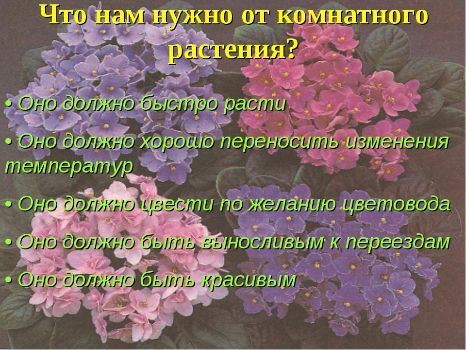 Что нам нужно от комнатного растения? • Оно должно быстро расти • Оно должно...