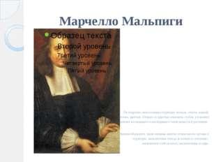 Марчелло Мальпиги  Он подробно описал микроструктуру листьев, стебля, корней