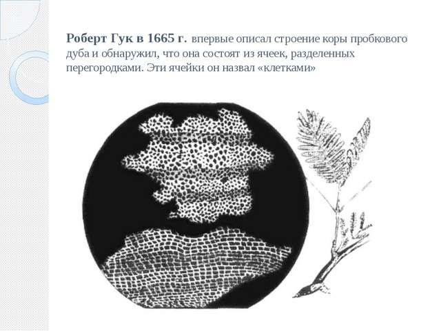Роберт Гук в 1665 г. впервые описал строение коры пробкового дуба и обнаружил...