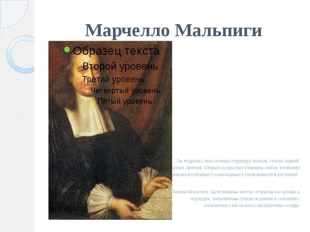 Марчелло Мальпиги  Он подробно описал микроструктуру листьев, стебля, корней...