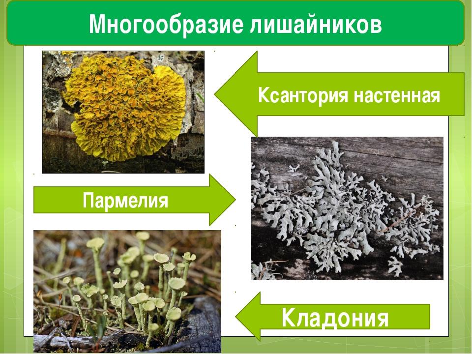 биология 6 класс знакомство с цветковым растением