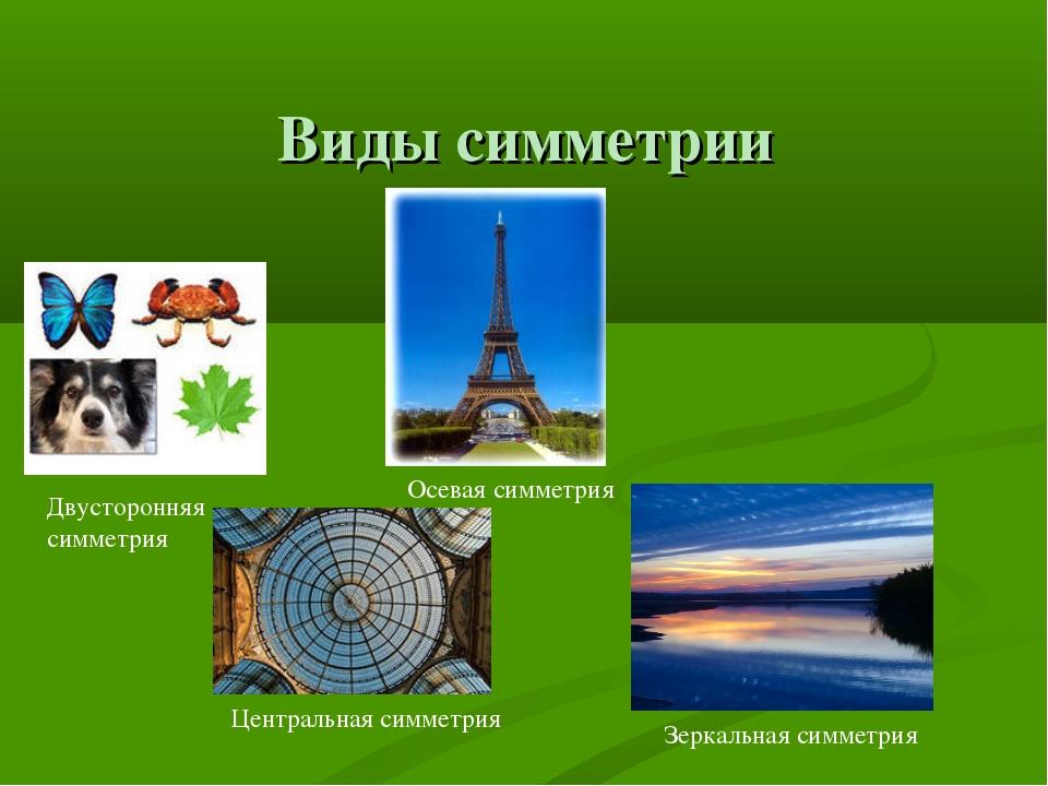 Виды симметрии Двусторонняя симметрия Осевая симметрия Центральная симметрия...