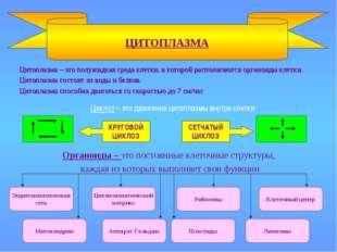 Цитоплазма – это полужидкая среда клетки, в которой располагаются органоиды