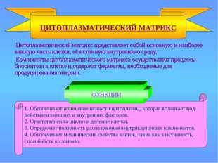 Цитоплазматический матрикс представляет собой основную и наиболее важную час