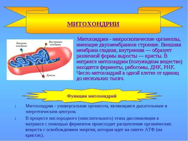 Митохондрии - микроскопические органеллы, имеющие двухмембранное строение. В...