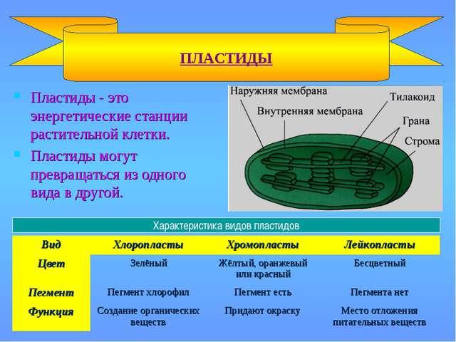 Пластиды - это энергетические станции растительной клетки. Пластиды могут пре...