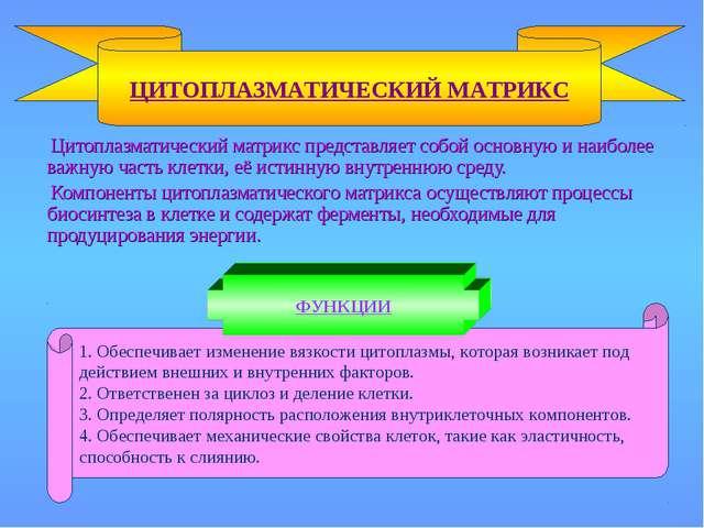 Цитоплазматический матрикс представляет собой основную и наиболее важную час...