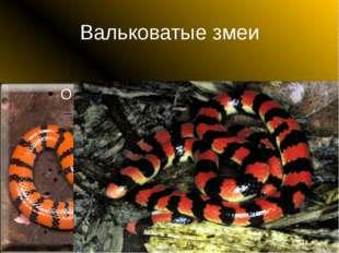 Вальковатые змеи