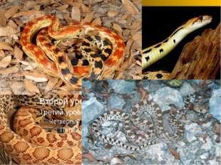 Сосновая змея