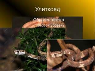 Улиткоед