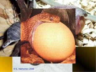 Яичная змея