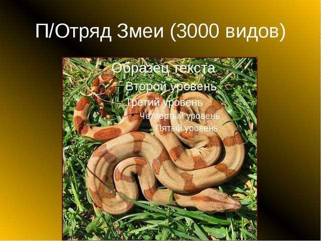 П/Отряд Змеи (3000 видов)