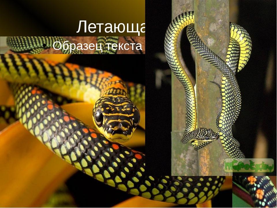 Летающая змея
