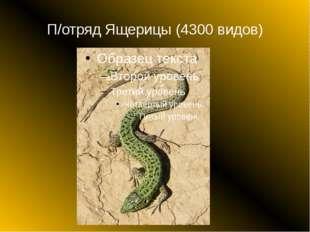 П/отряд Ящерицы (4300 видов)