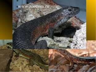 Зонозавр