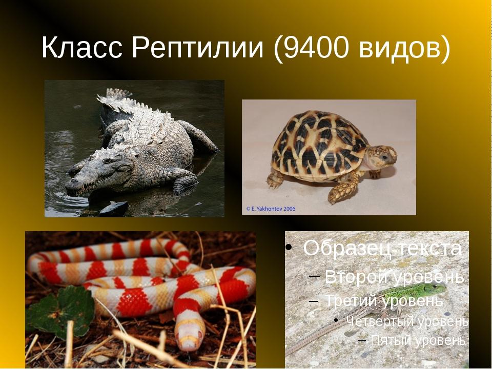 Класс Рептилии (9400 видов)