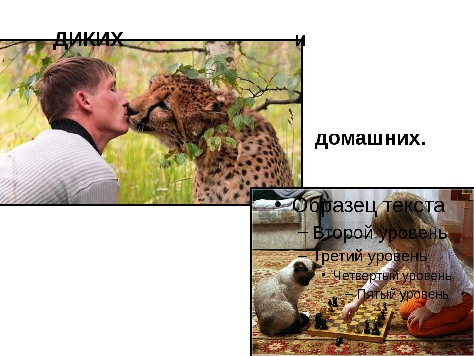 ДИКИХ и домашних.
