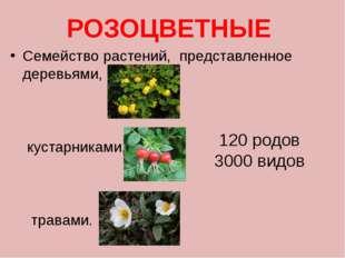 Плоды розоцветных очень привлекательны, и в то же время съедобны и полезны. Ф