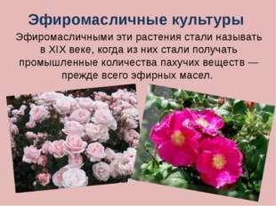 Шиповник – многолетнее культурное и дикорастущее растение. Своё русское назва