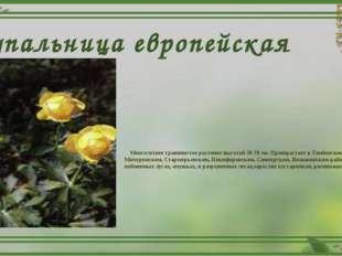 Купальница европейская Многолетнее травянистое растение высотой 30-70 см. Про