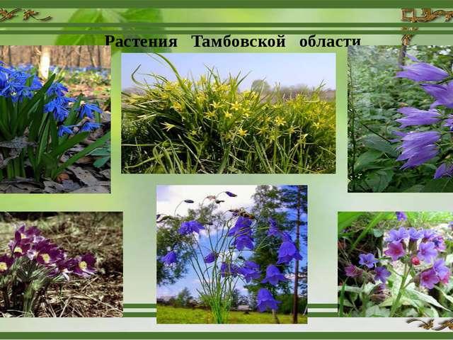Растения Тамбовской области