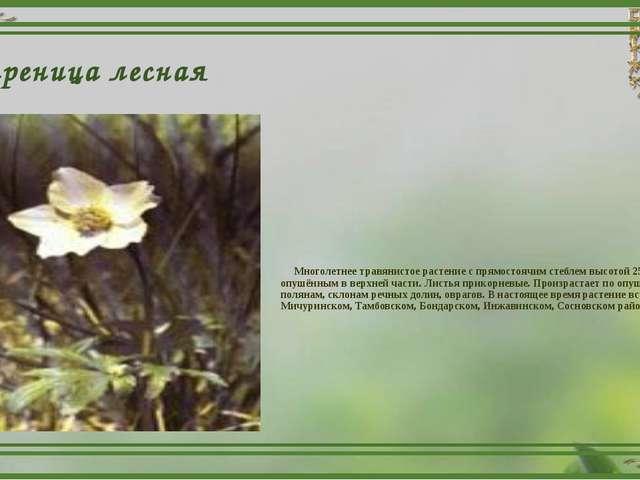 Ветреница лесная Многолетнее травянистое растение с прямостоячим стеблем высо...
