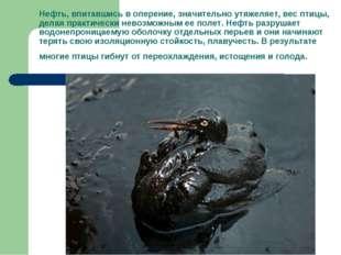 Нефть, впитавшись в оперение, значительно утяжеляет, вес птицы, делая практич