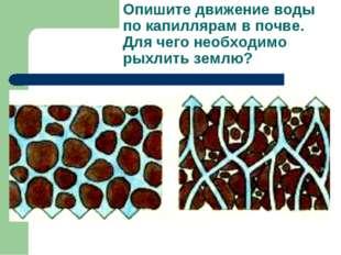 Опишите движение воды по капиллярам в почве. Для чего необходимо рыхлить землю?