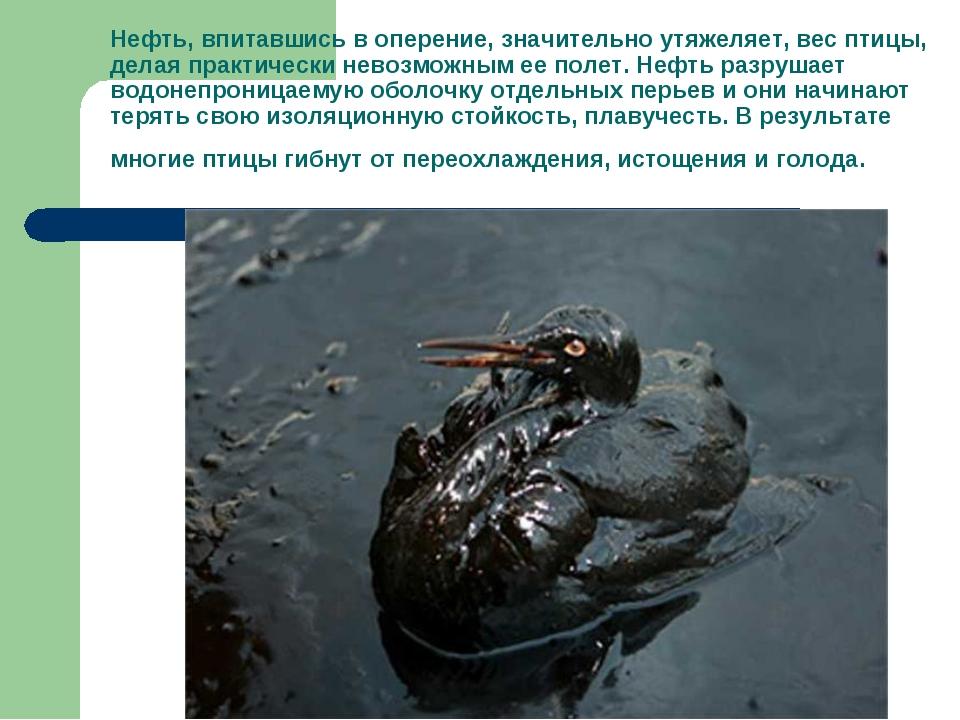 Нефть, впитавшись в оперение, значительно утяжеляет, вес птицы, делая практич...