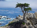 http://upload.wikimedia.org/wikipedia/commons/thumb/8/80/17_mile_drive_cypress.jpg/120px-17_mile_drive_cypress.jpg
