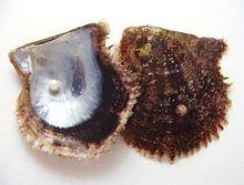 http://upload.wikimedia.org/wikipedia/commons/thumb/a/a9/Uwakoya3.JPG/220px-Uwakoya3.JPG