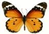 Живая бабочки - самый лучший подарок. - Форумы DozoR